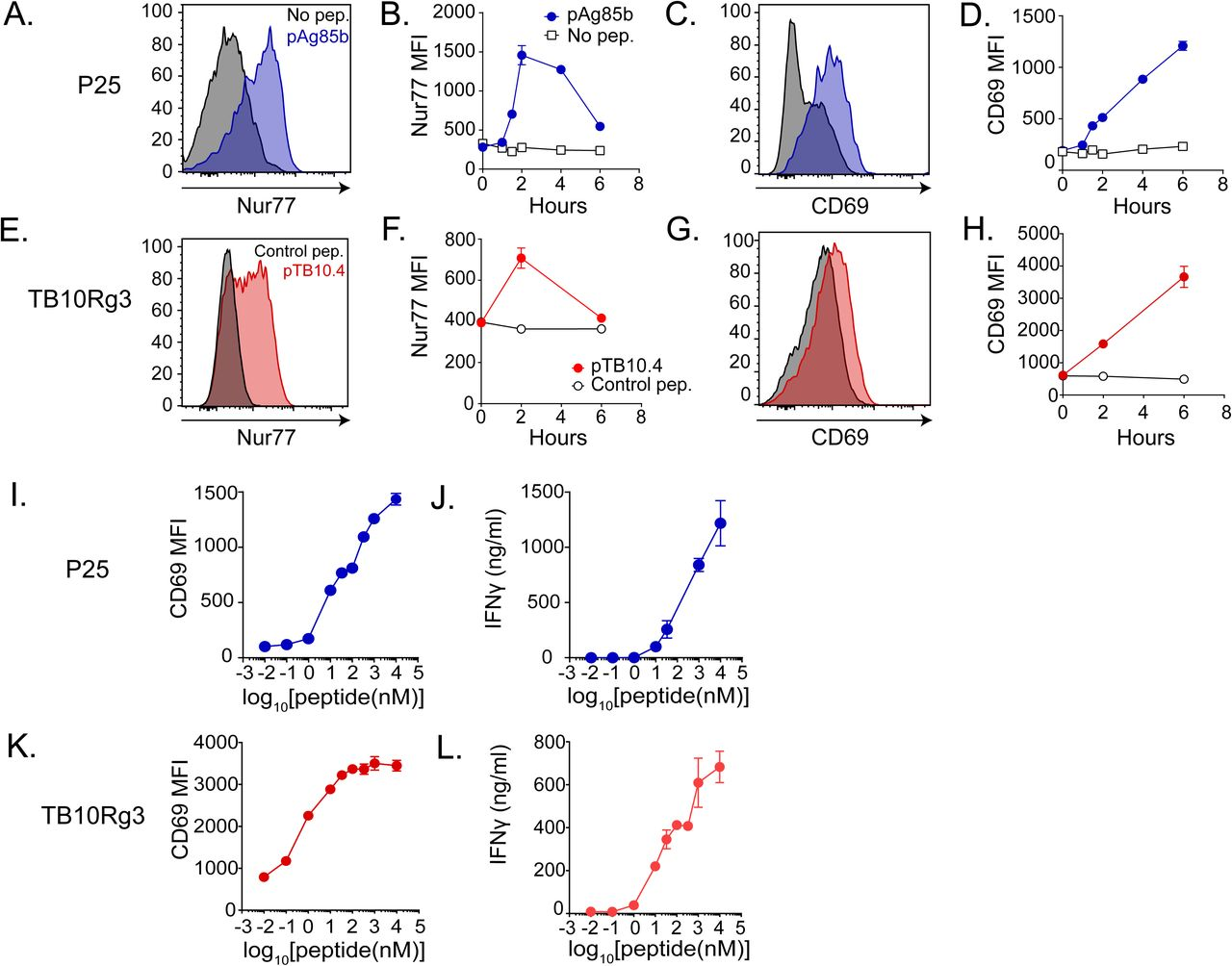 Mycobacterium tuberculosis-specific CD4+ and CD8+ T cells