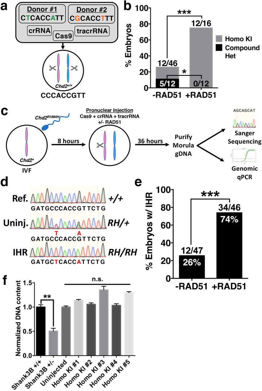 RAD51 Enhances Zygotic Interhomolog Repair | bioRxiv