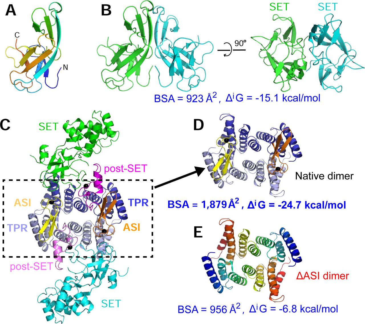 Structure of a novel dimeric SET domain methyltransferase