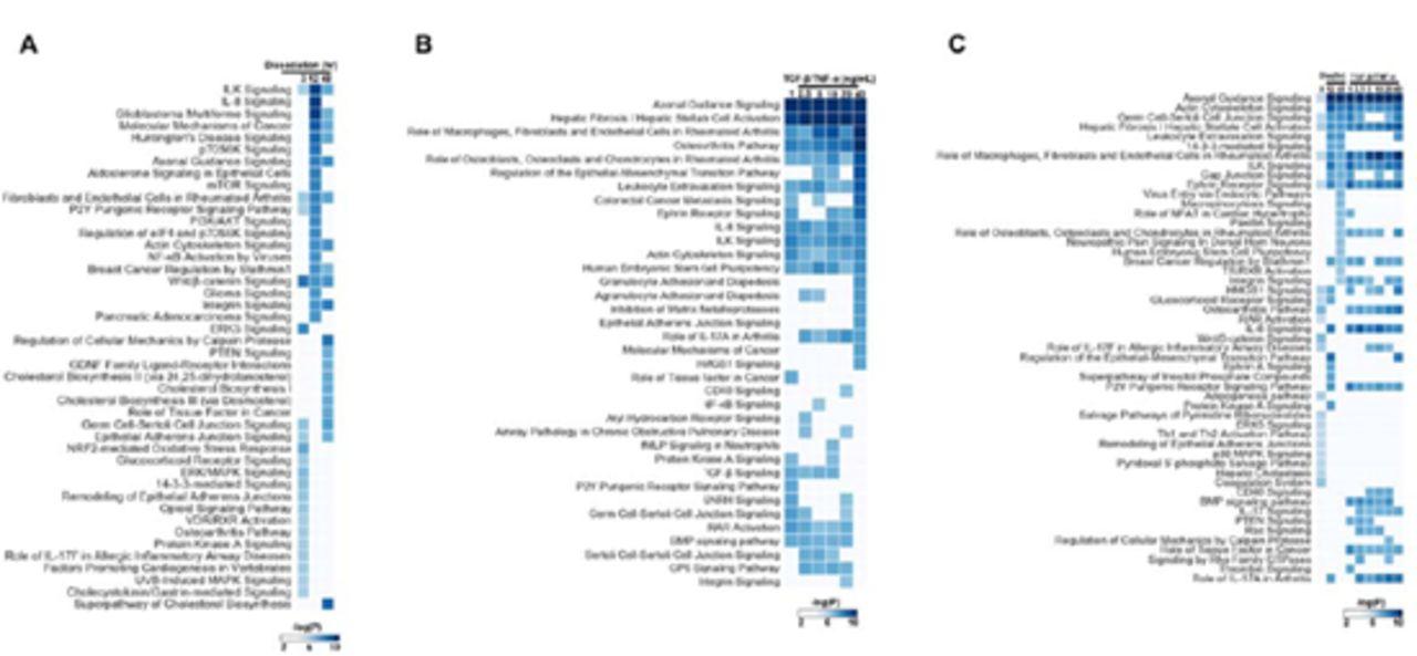 Axon Guidance Signaling Modulates Epithelial to Mesenchymal