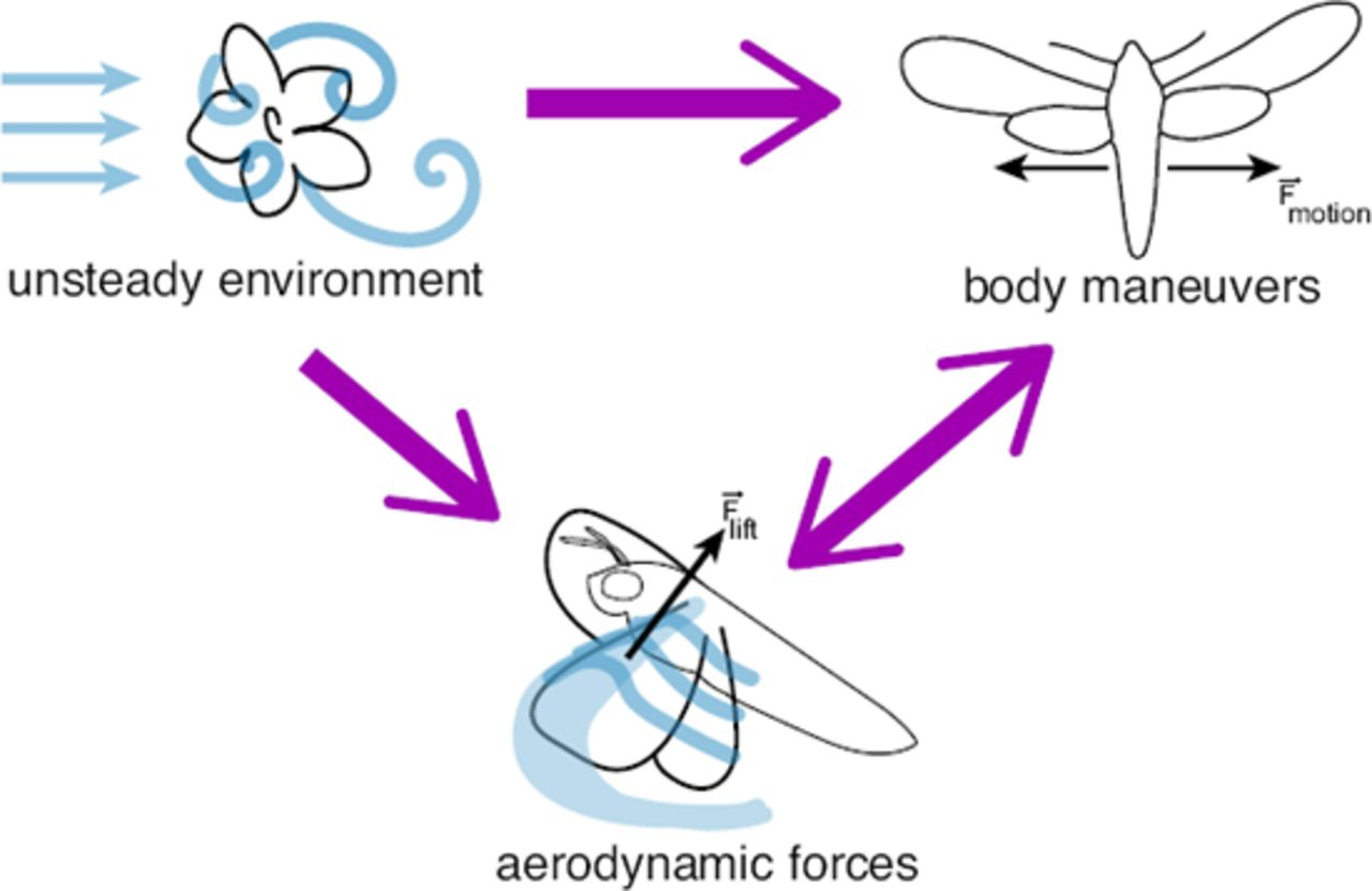 Hawkmoth flight in the unsteady wakes of flowers | bioRxiv