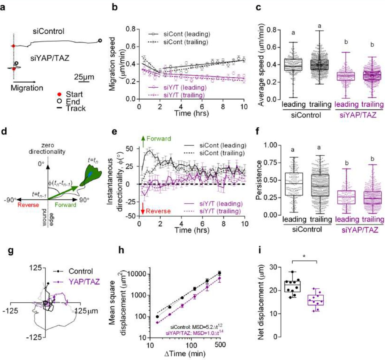 Persistent cell motility requires transcriptional feedback of