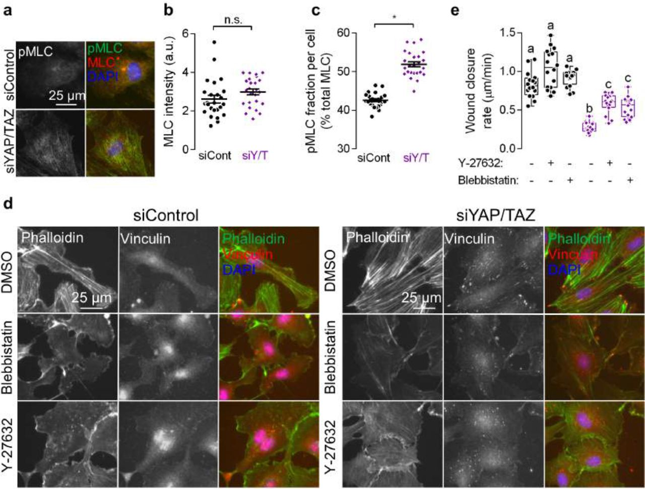 Persistent cell motility requires transcriptional feedback