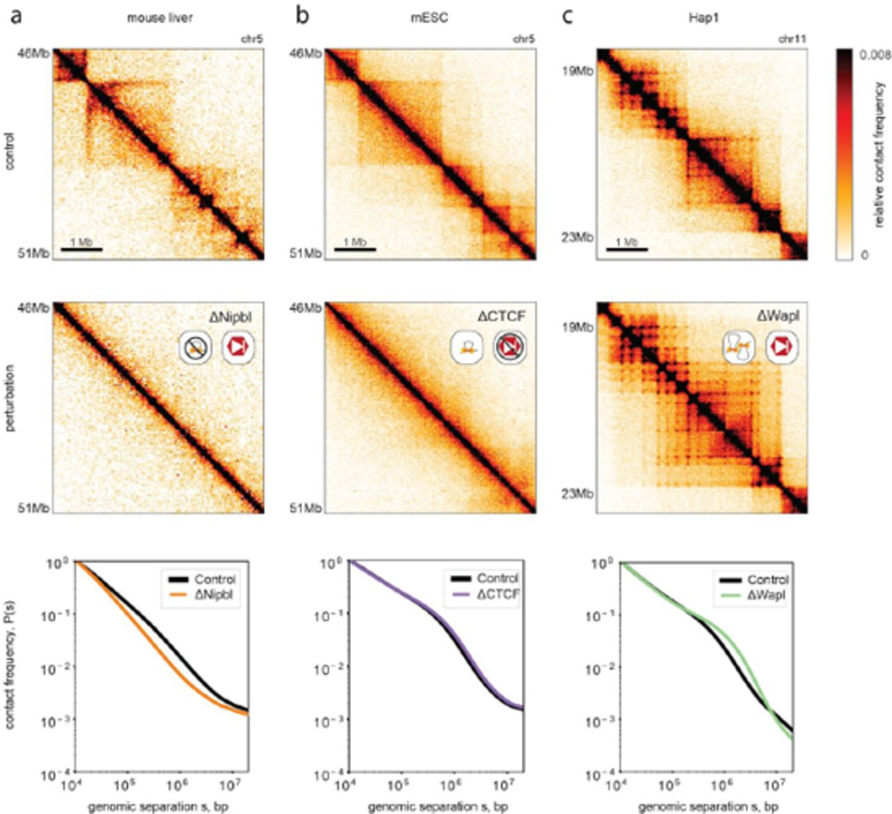 Emerging Evidence of Chromosome Folding by Loop Extrusion