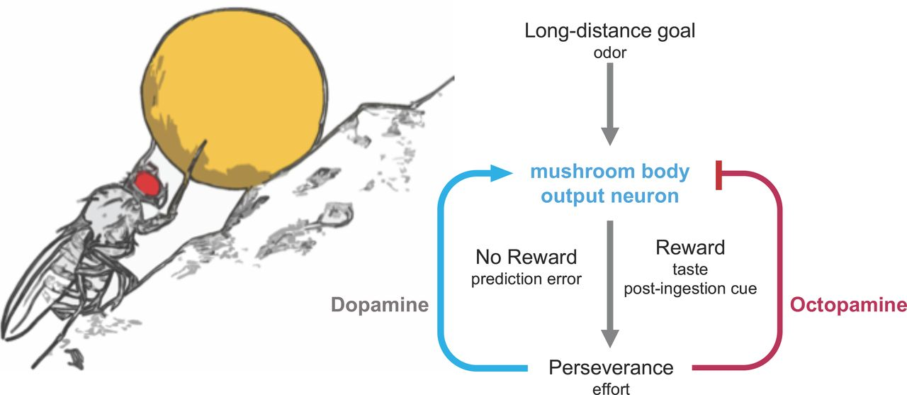 A neural circuit arbitrates between perseverance and