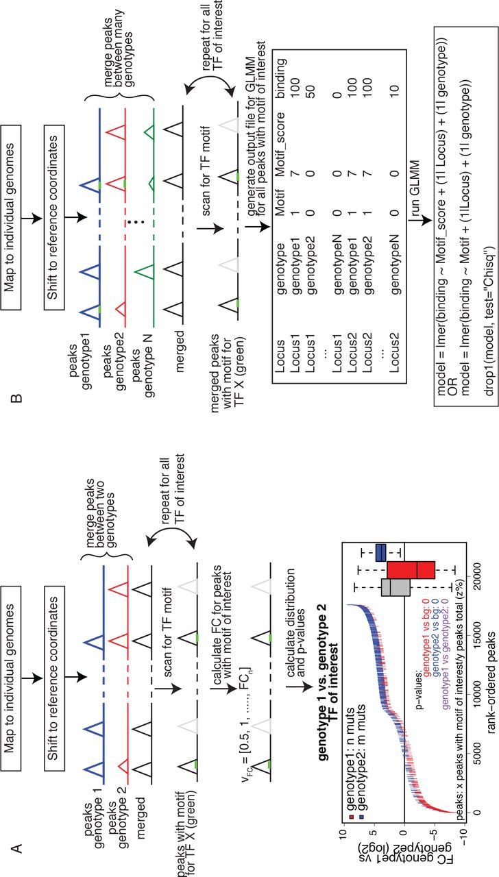 MARGE: Mutation Analysis for Regulatory Genomic Elements