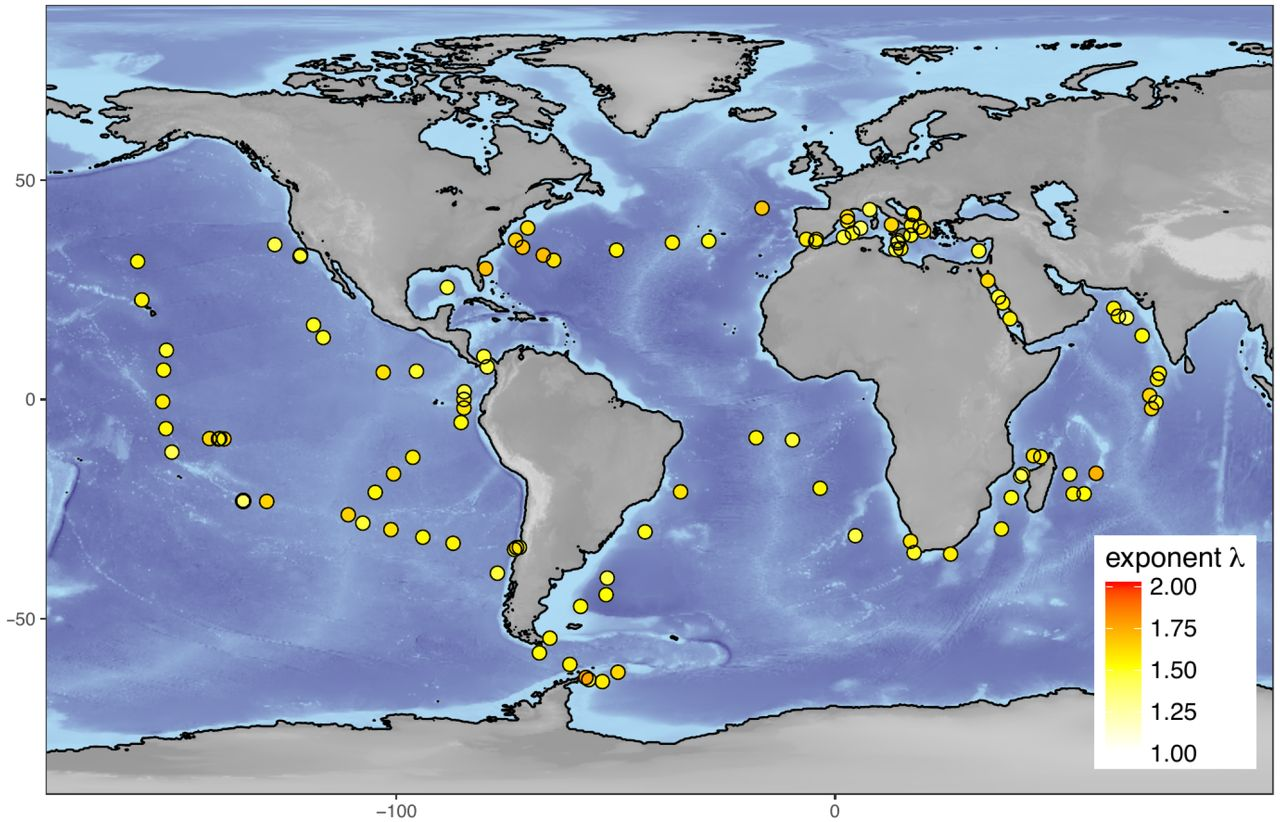 Ubiquitous abundance distribution of non-dominant plankton