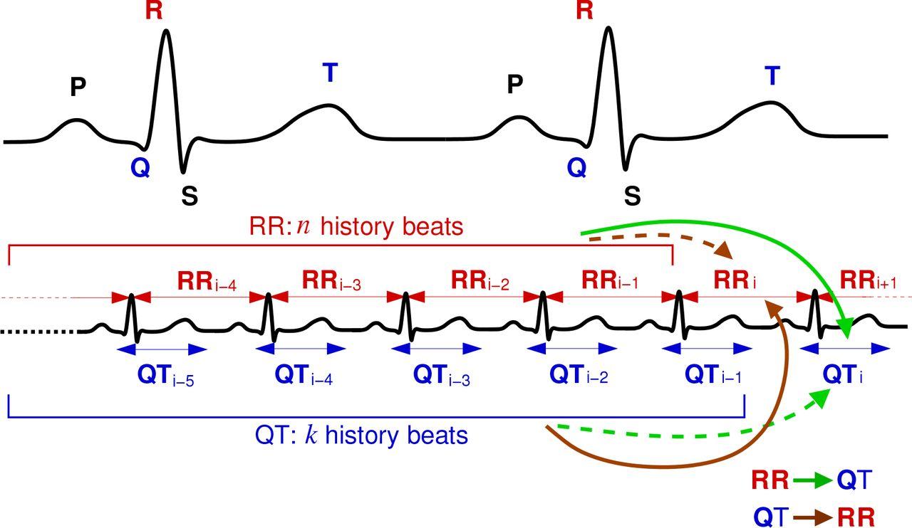 Information transfer in QT-RR dynamics: Towards a model-free QT
