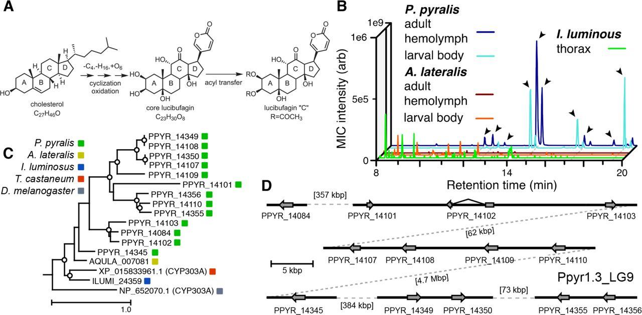 Firefly genomes illuminate parallel origins of bioluminescence in