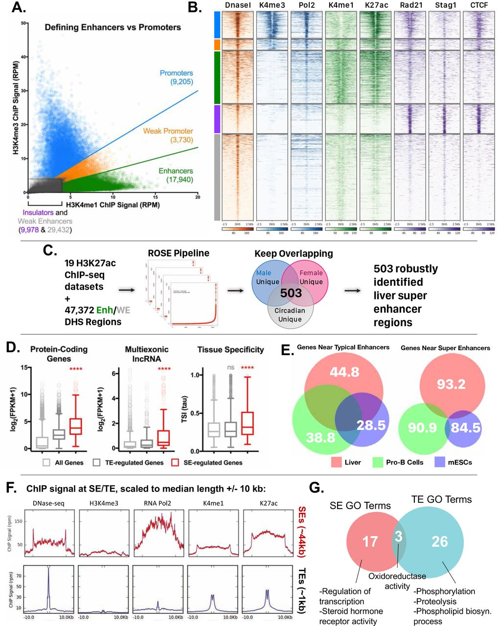 Insulation of gene expression by CTCF and cohesin-based subTAD