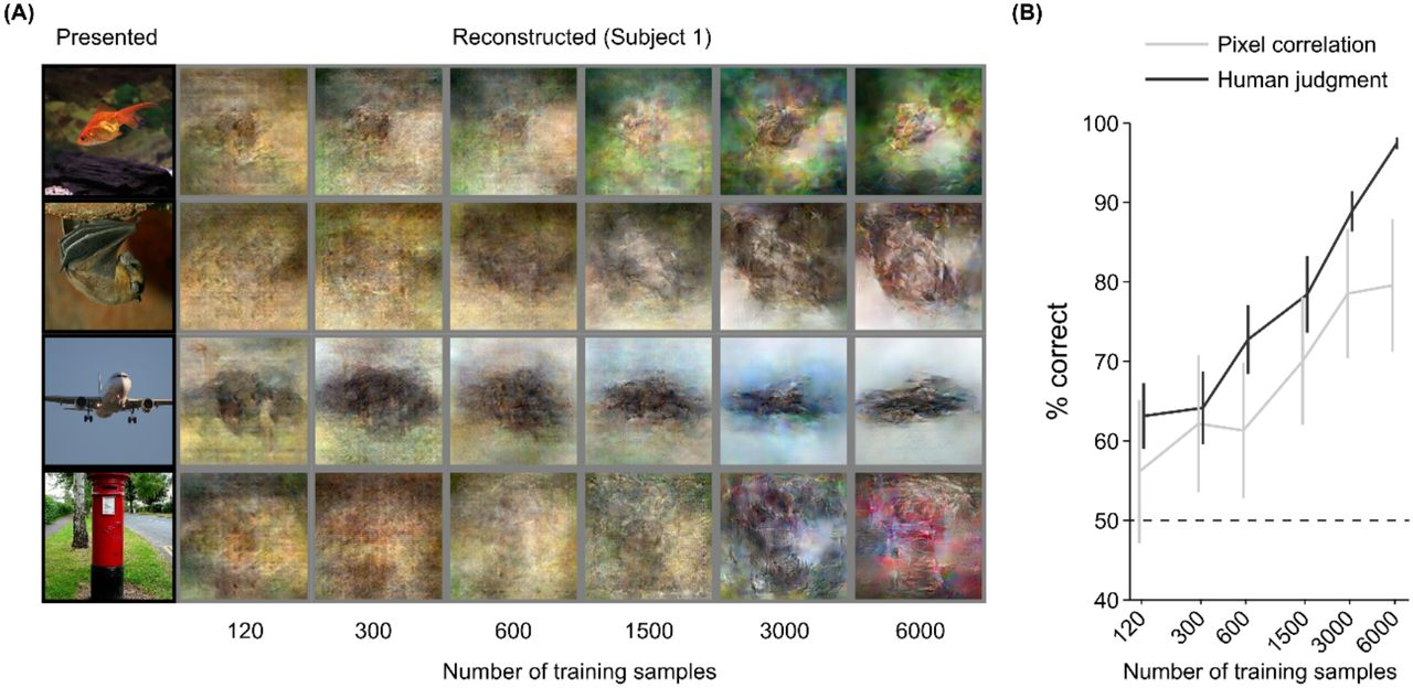 End-to-end deep image reconstruction from human brain activity | bioRxiv