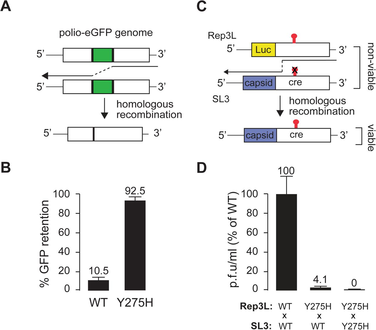 Genetic recombination of poliovirus facilitates subversion of host
