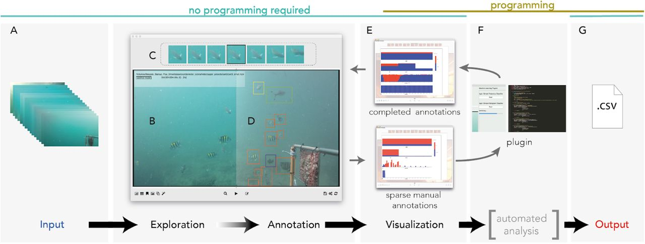VideoTagger: User-Friendly Software for Annotating Video Experiments