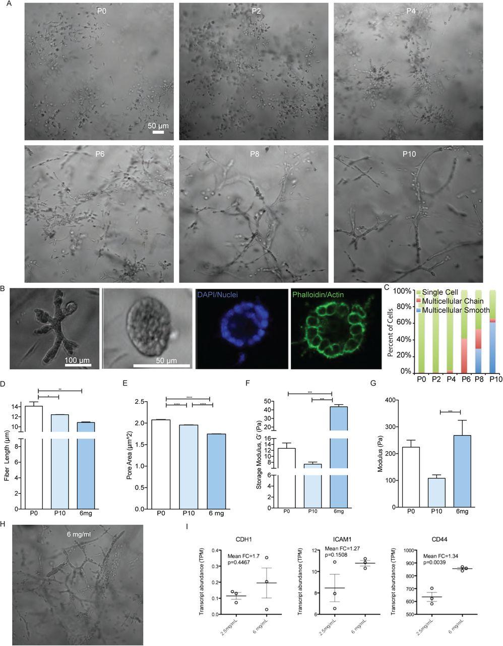 Crowding tunes 3D collagen fibrils and reveals matrix