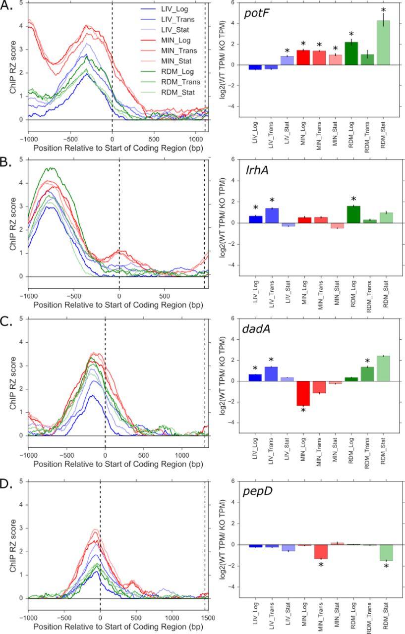 Escherichia coli Lrp regulates one-third of the genome via direct