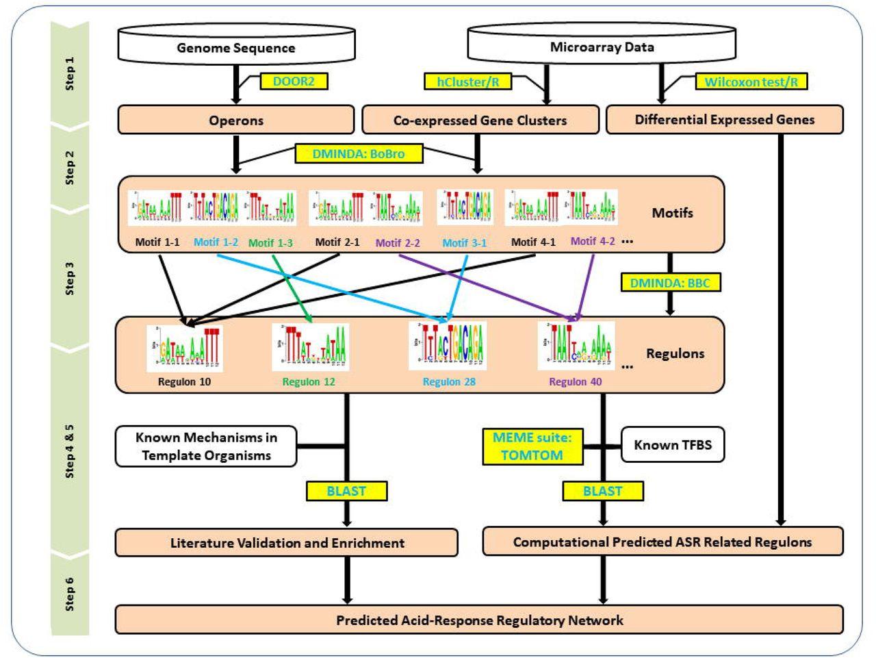 RECTA: Regulon Identification Based on Comparative Genomics