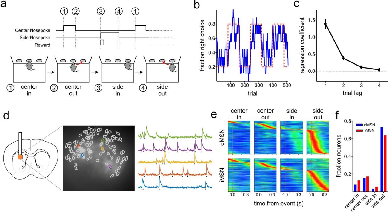 Distinct value encoding in striatal direct and indirect pathways