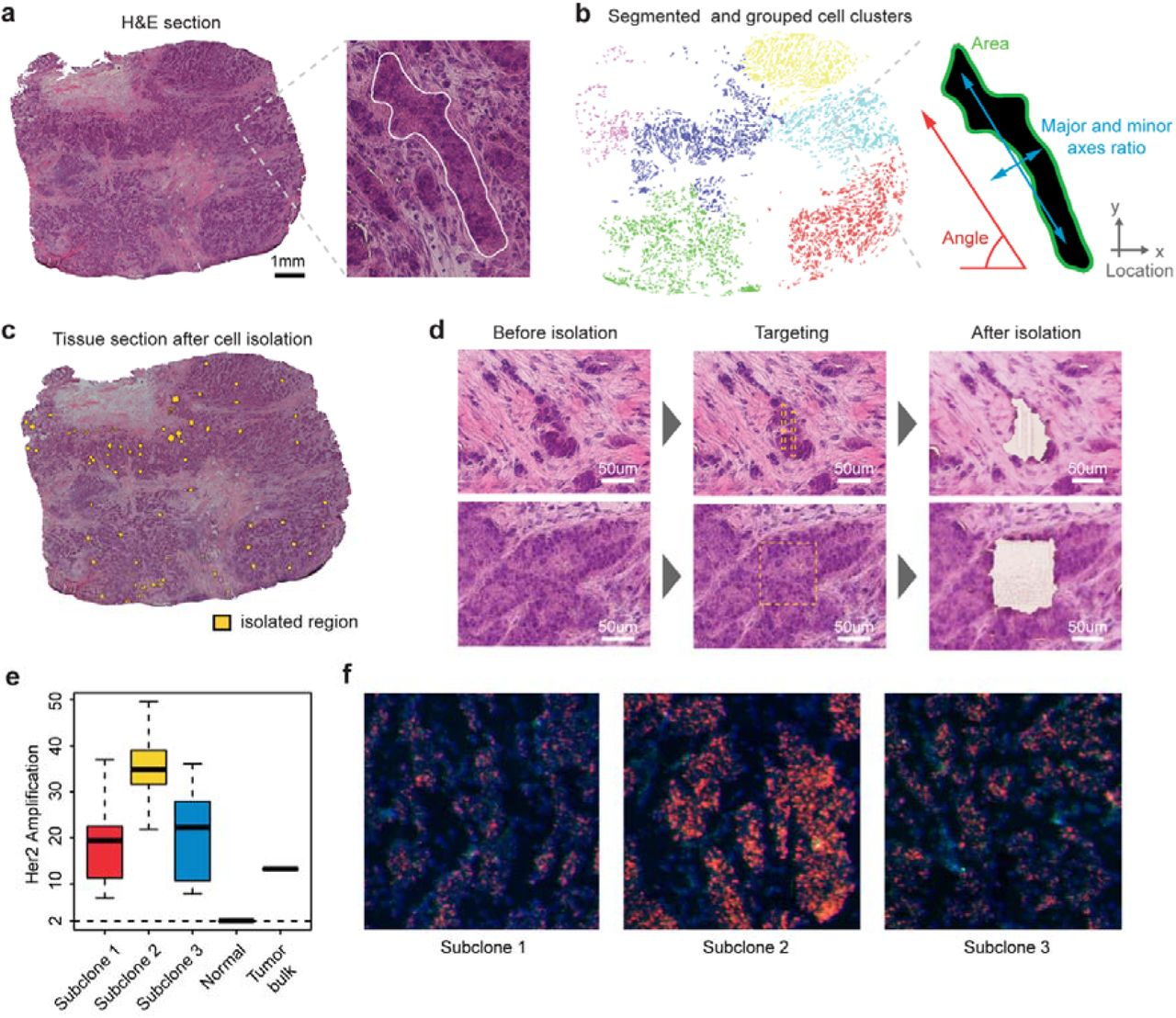 Constructing and Visualizing Cancer Genomic Maps in 3D