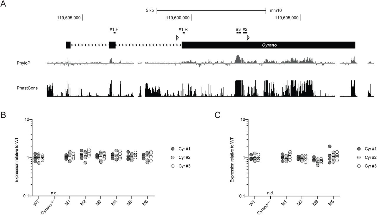 A Network of Noncoding Regulatory RNAs Acts in the Mammalian