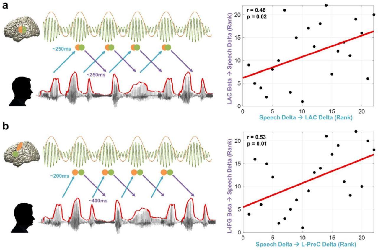 Predictive entrainment of natural speech through two fronto-motor