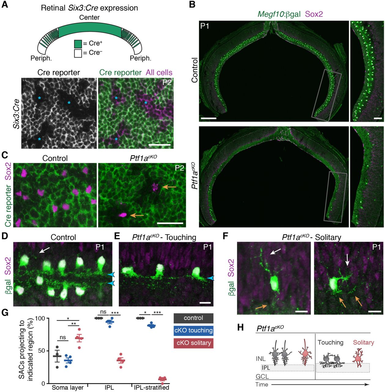 Formation of retinal direction-selective circuitry initiated by