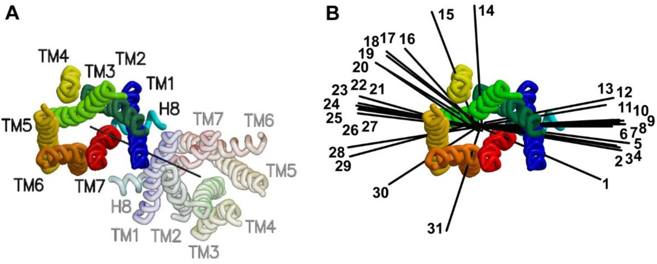 Identifying G protein-coupled receptor dimers from crystal