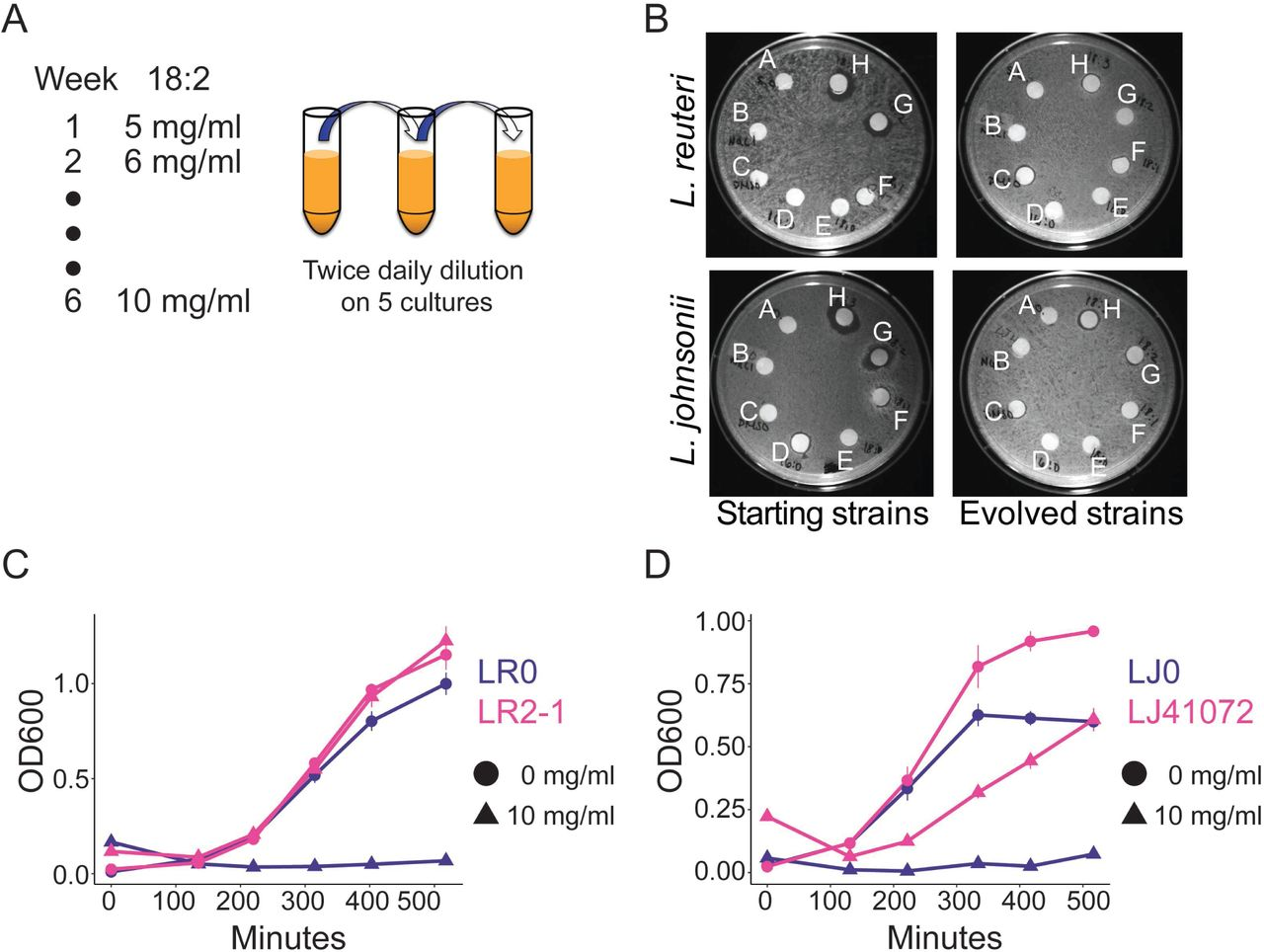 Resilience of small intestinal beneficial bacteria to the