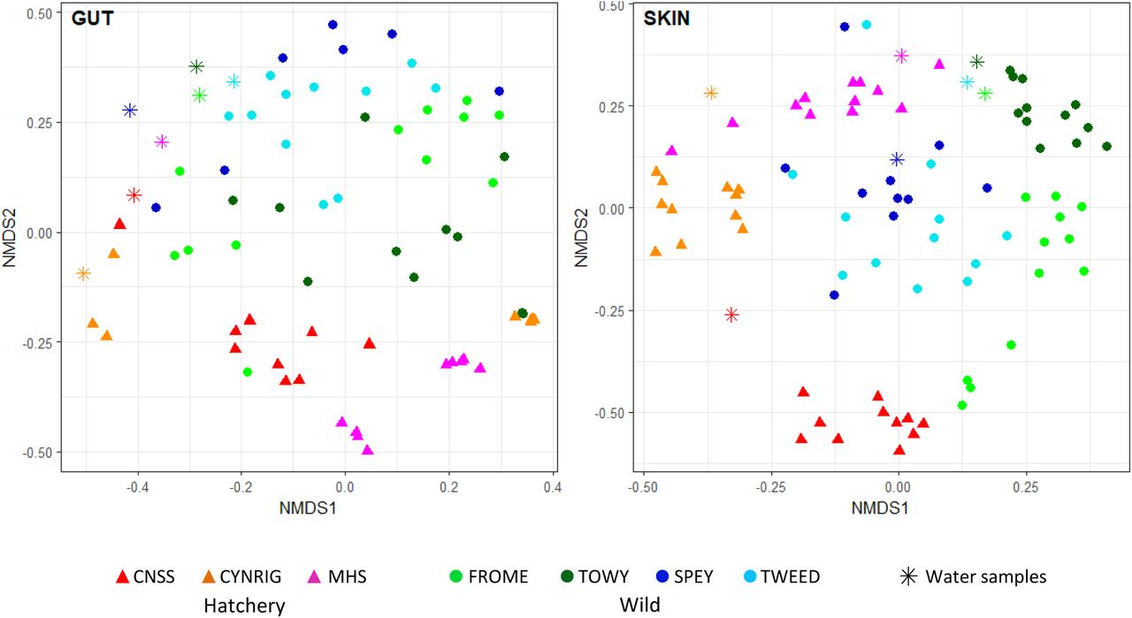 Inter-population variation in the Atlantic salmon microbiome