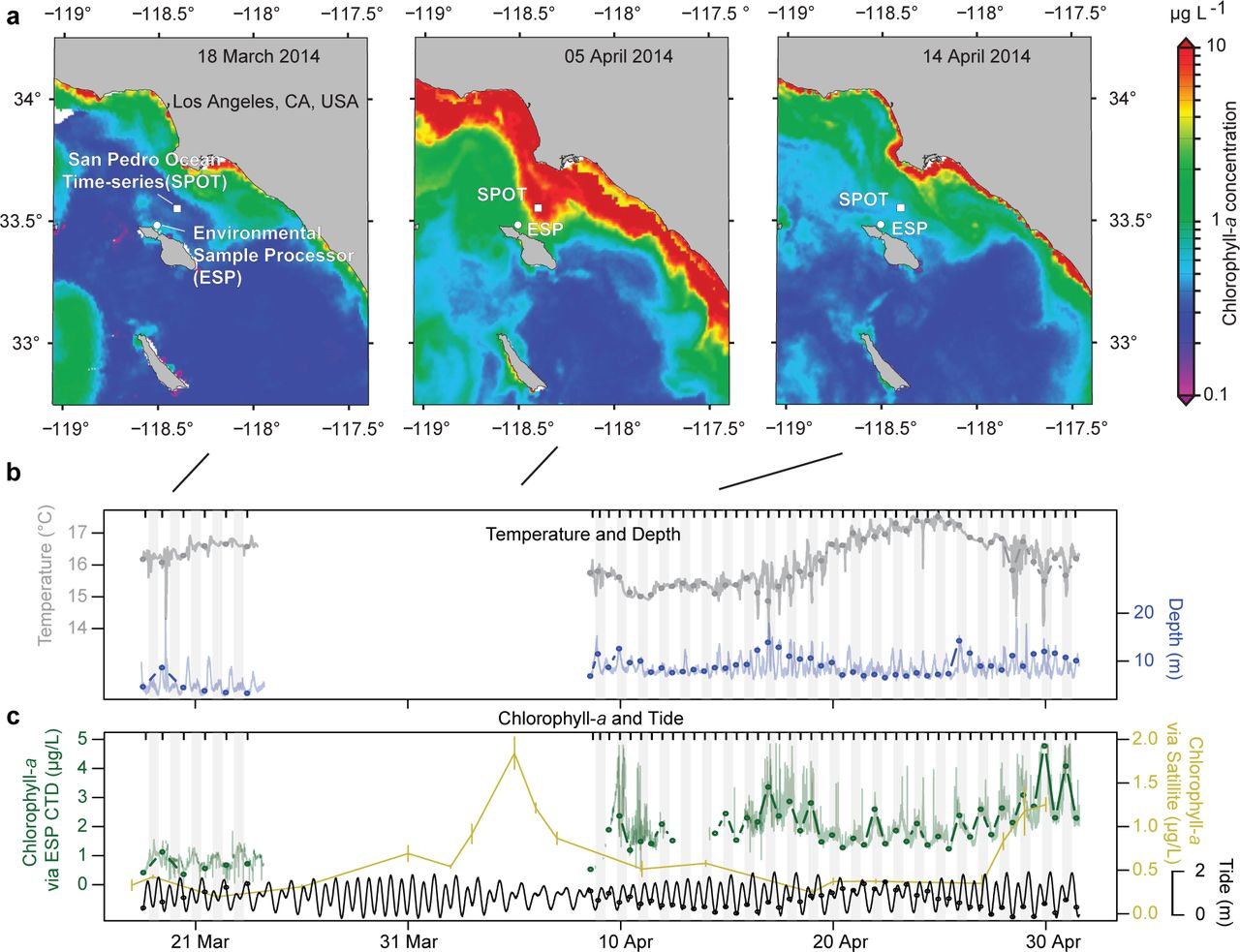 Dynamics and interactions of highly resolved marine plankton