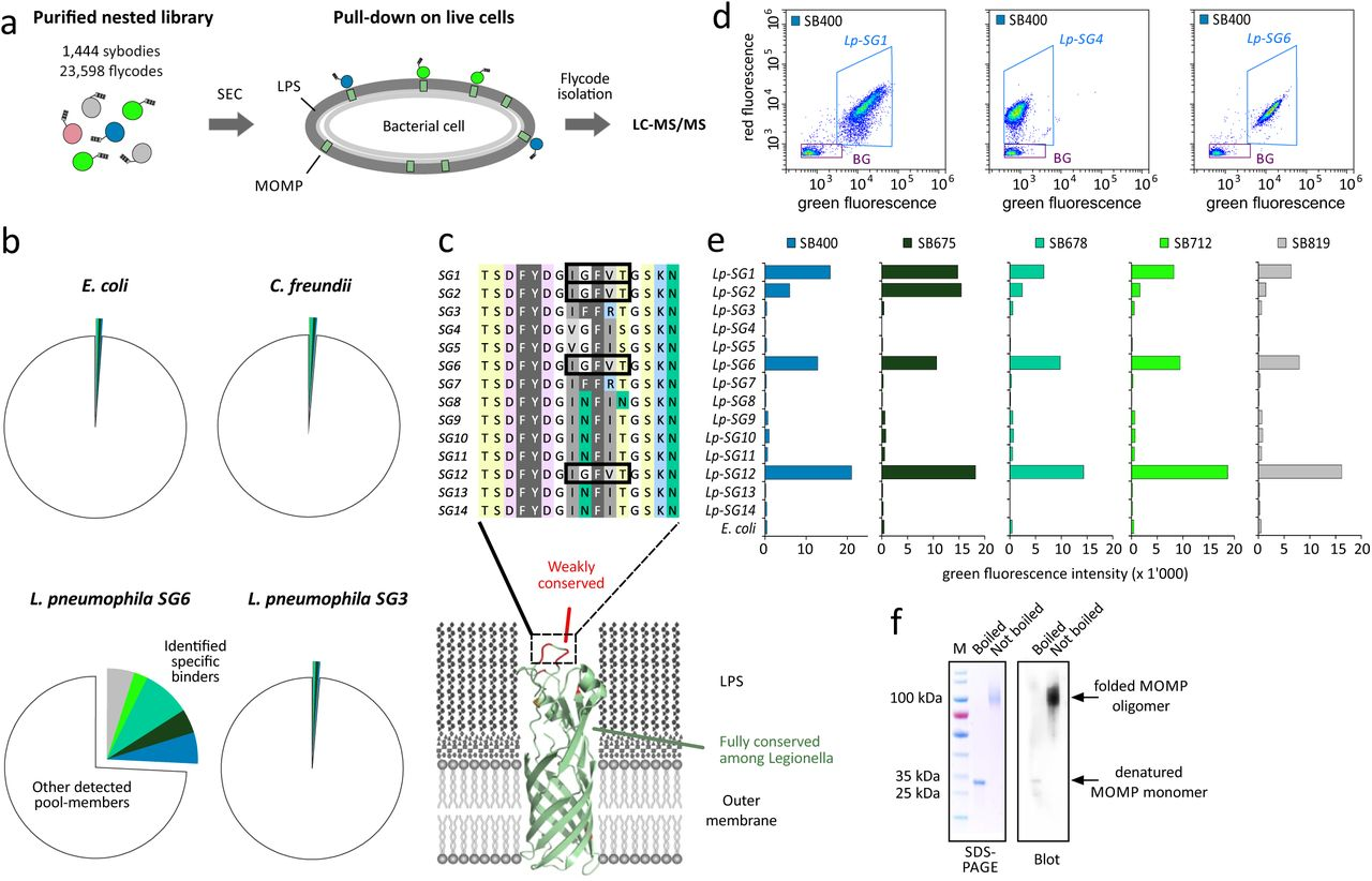 Engineered Peptide Barcodes for In-Depth Analyses of Binding