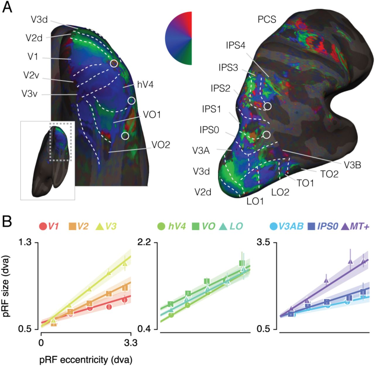 Spatial sampling in human visual cortex is modulated by both spatial