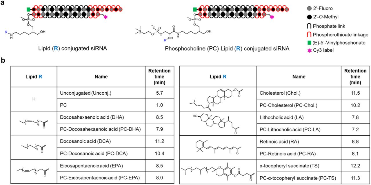 Diverse lipid conjugates for functional extra-hepatic siRNA delivery