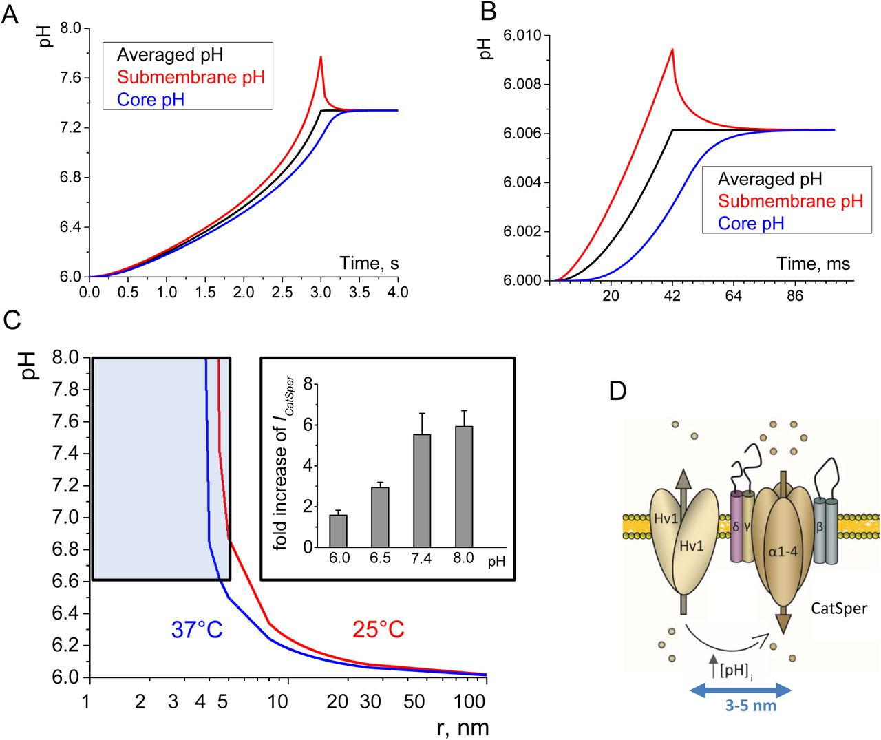 Asymmetrically Positioned Flagellar Control Units Regulate