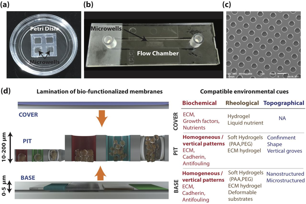 A new approach to design artificial 3D micro-niches with