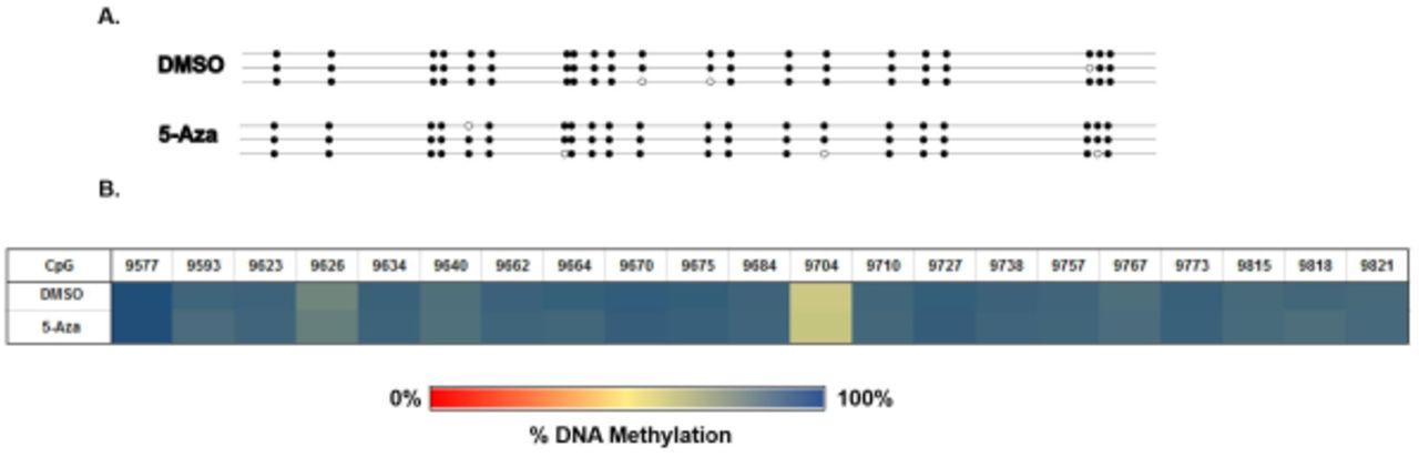 Targeted Gene Bisulfite Sequencing Identifies Differential
