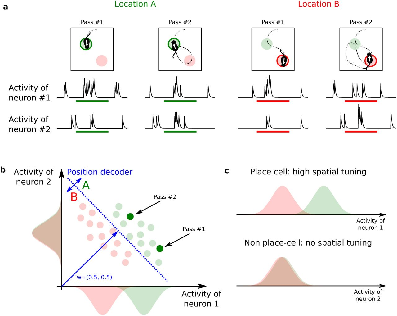 A distributed neural code in ensembles of dentate gyrus
