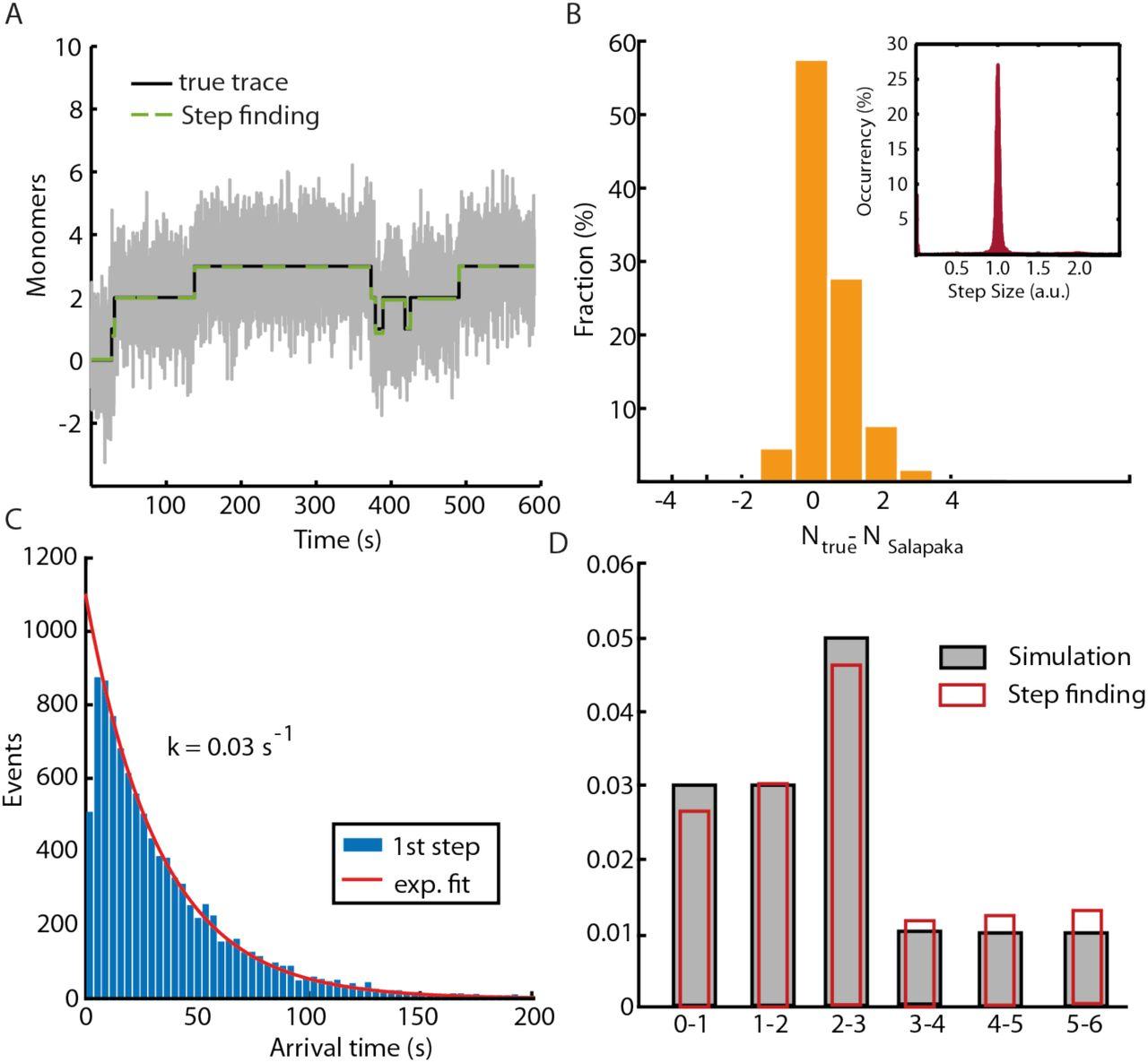 Dimer arrangement and monomer flattening determine actin