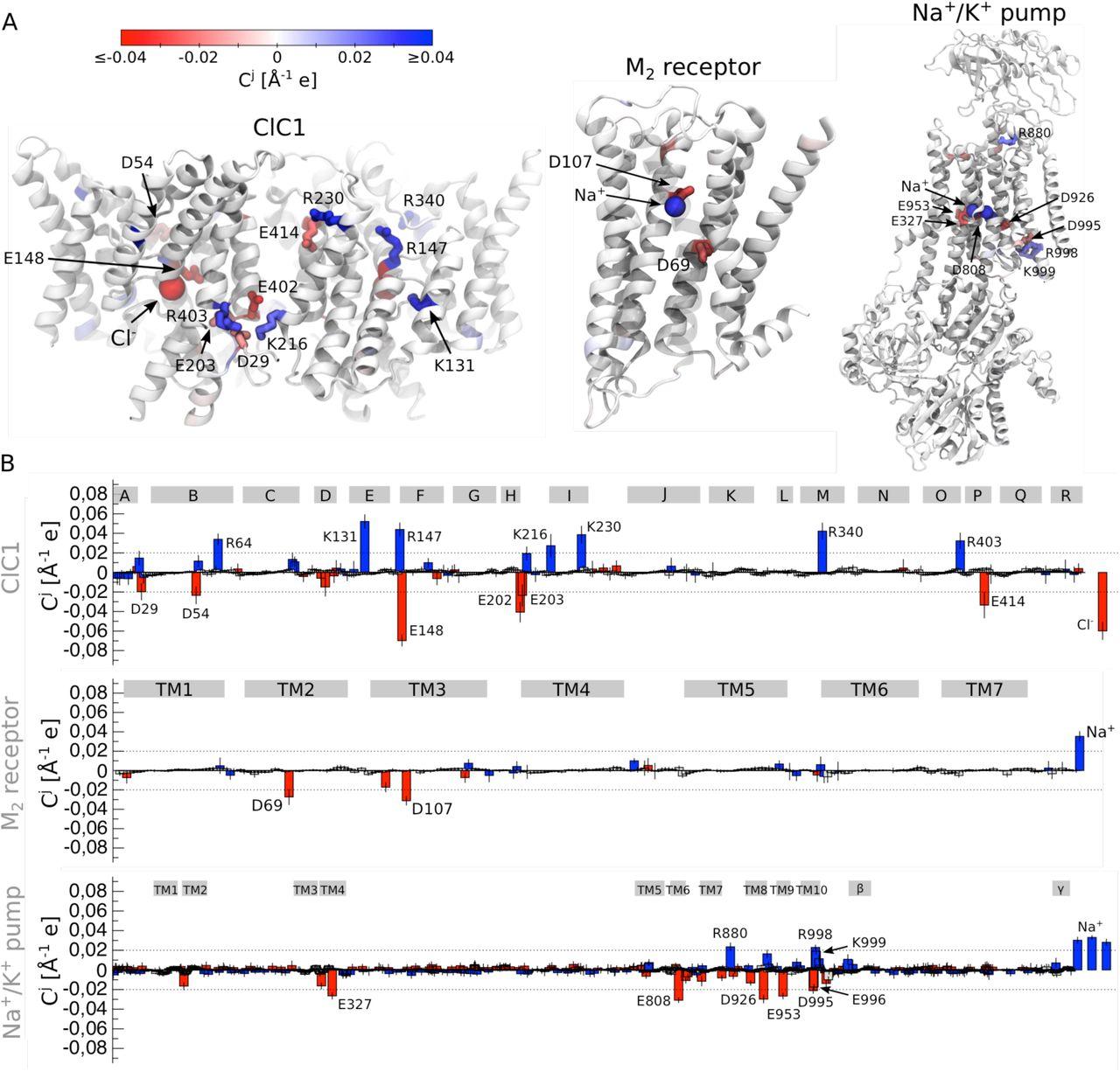 Molecular basis for voltage sensitivity in membrane proteins