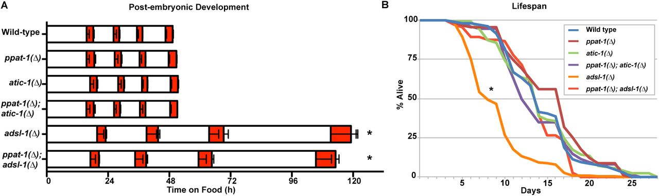 cbb85ee5c2 Adenylosuccinate Lyase activity in the Purine recycling pathway is ...