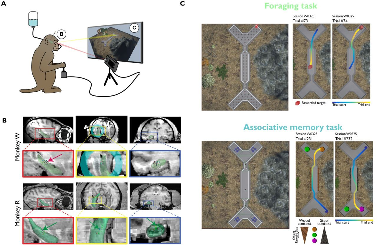 Flexible coding of memory and space in the primate hippocampus