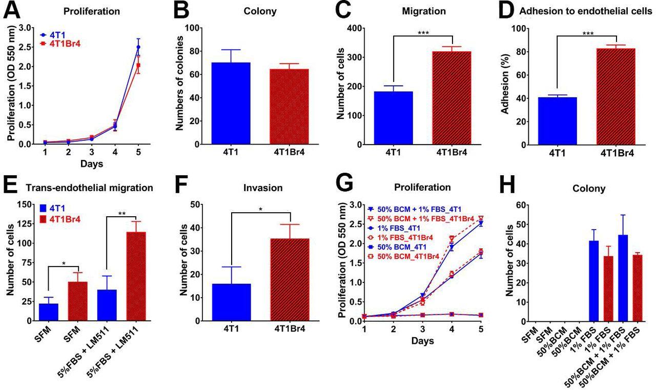 Identification of brain metastasis genes and therapeutic