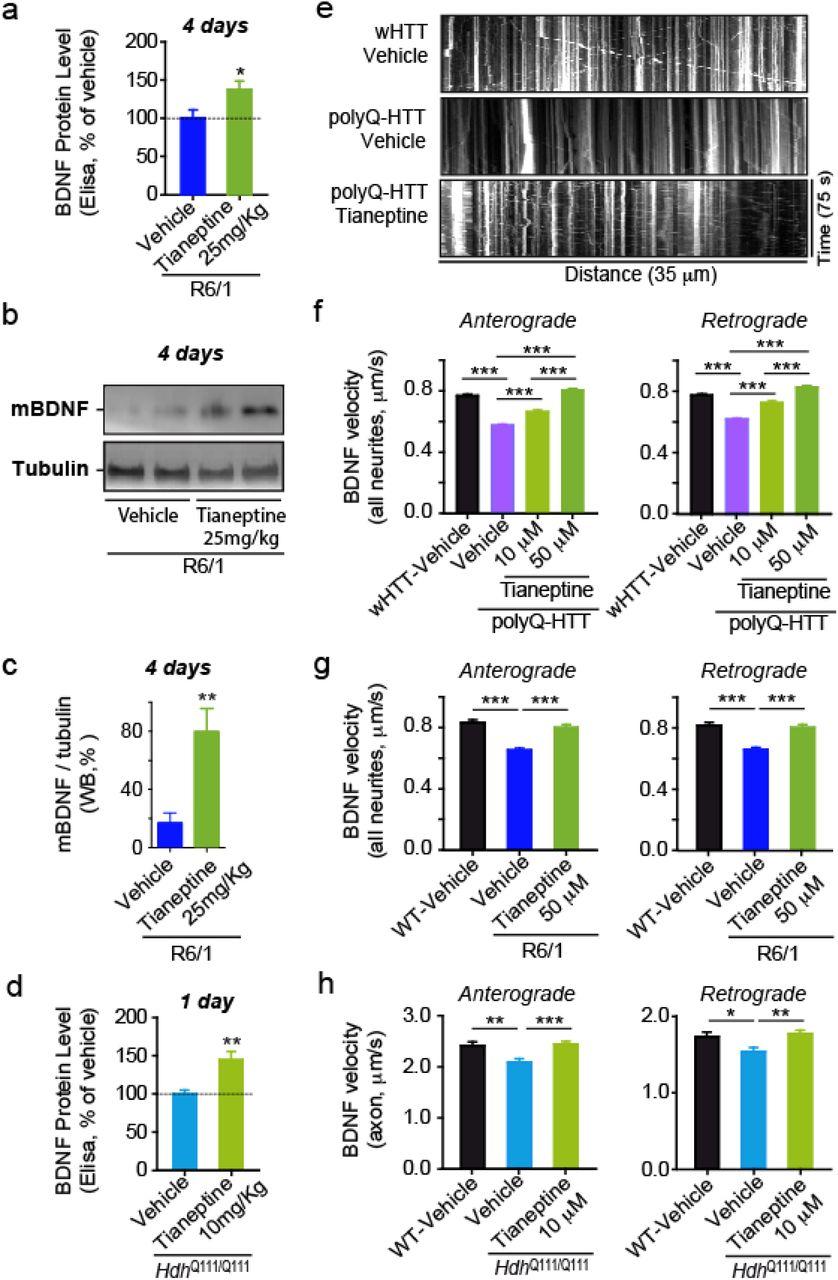 Pharmacological modulation of AMPA receptor surface
