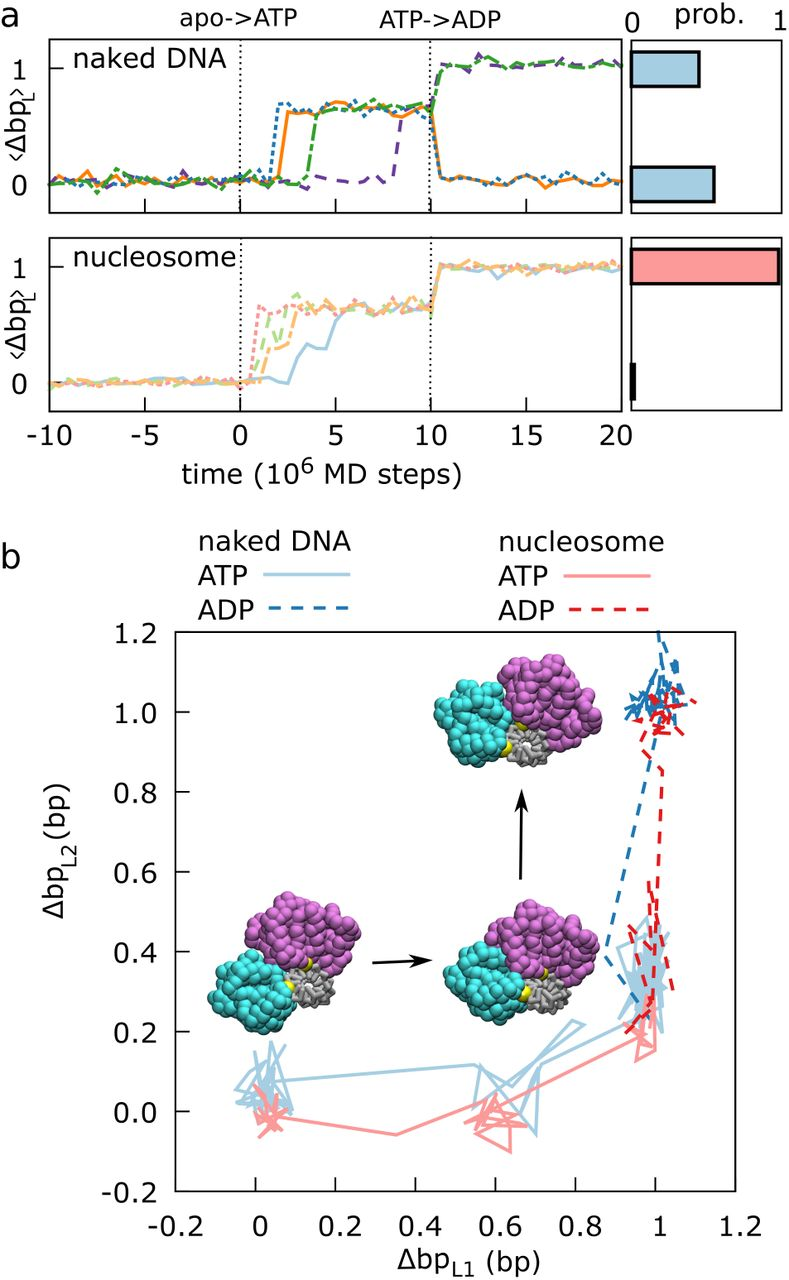 Chromatin remodelers couple inchworm motion with twist-defect