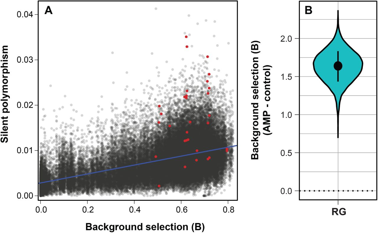 Balancing selection drives maintenance of genetic variation in