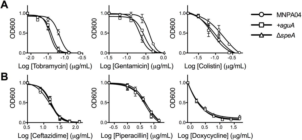Agmatine accumulation by Pseudomonas aeruginosa clinical