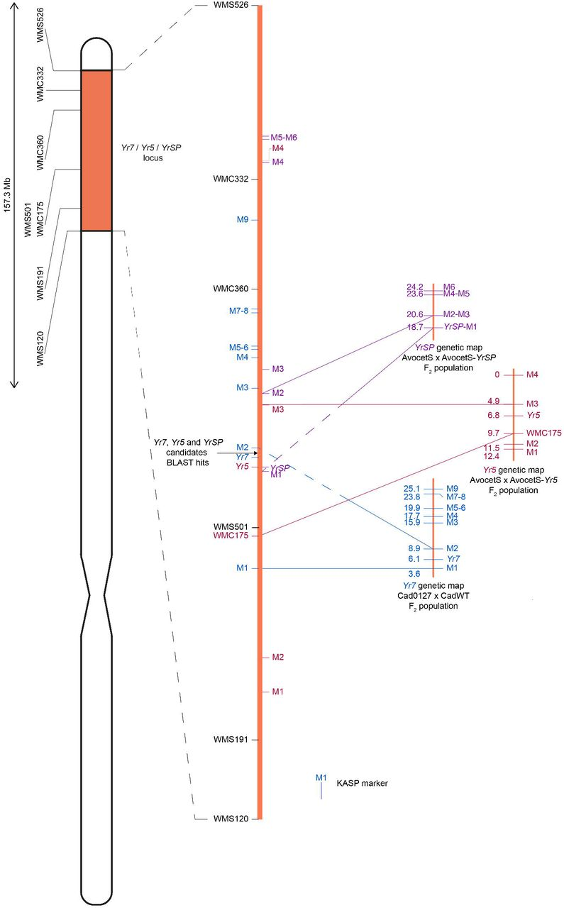 BED-domain containing immune receptors confer diverse