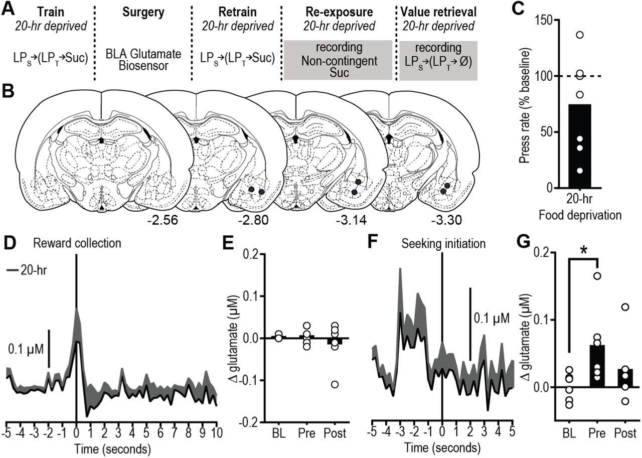 Distinct cortical-amygdala projections drive reward value ... on