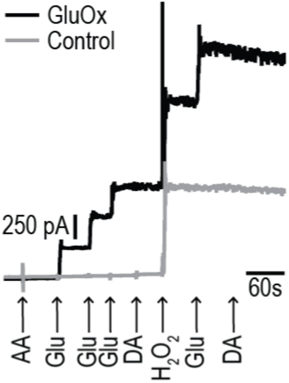 Distinct cortical-amygdala projections drive reward value