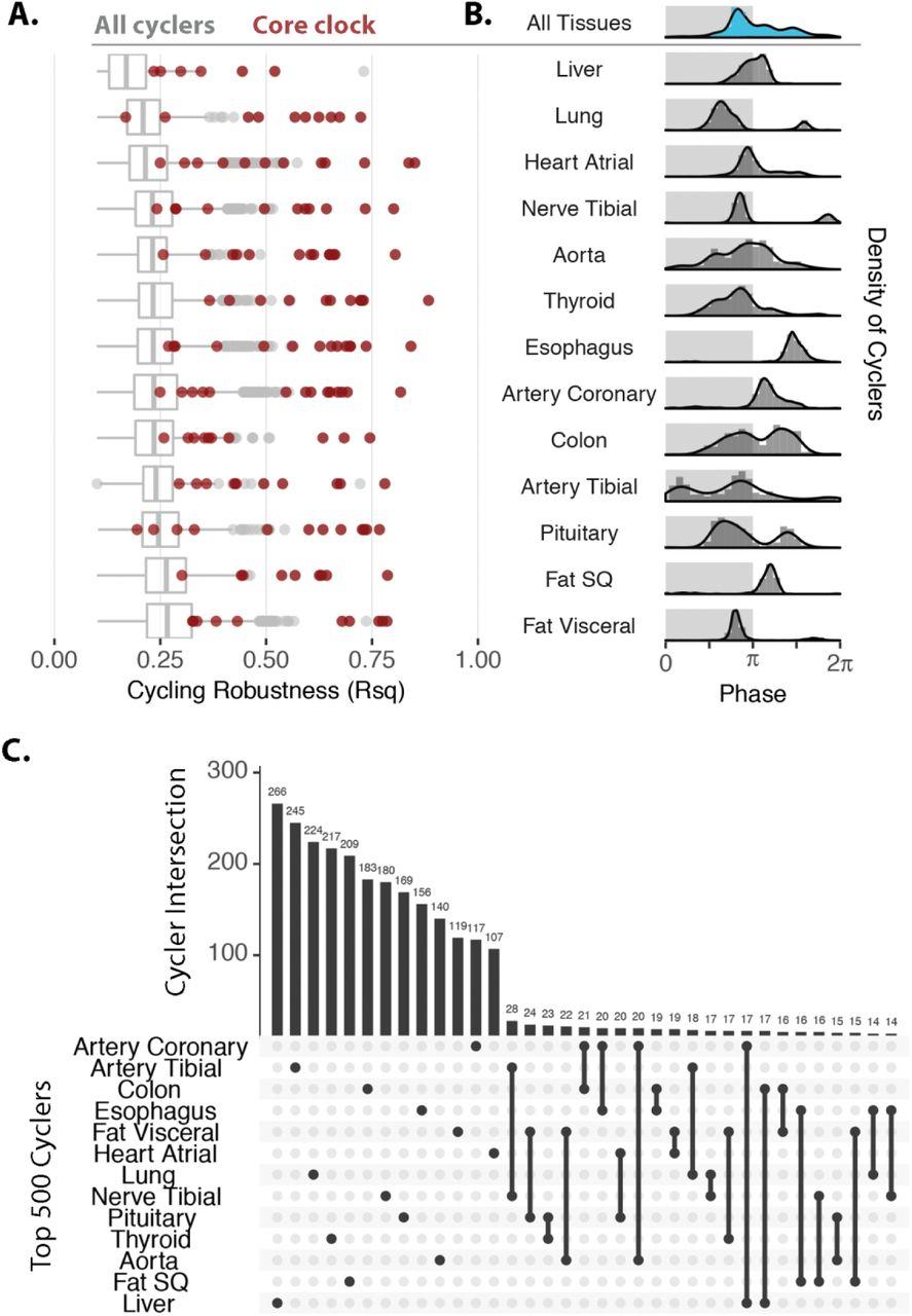 A population-based human enCYCLOPedia for circadian medicine