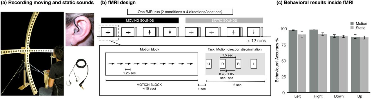 Representation of auditory motion directions and sound source
